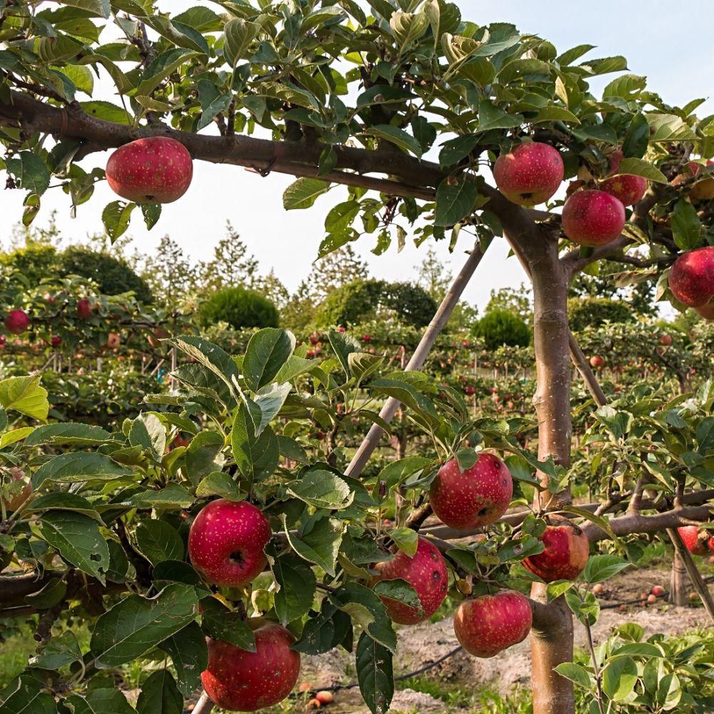 Pommes Rouges Modi de Frédéric Ayme (Tarascon  13) x 500g