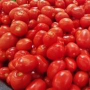 Tomates coeur de boeuf de Frédéric Ayme (Fontvieille 13) x 500g