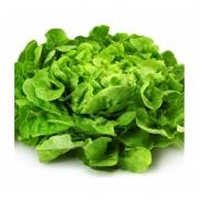 Salade d'André Aude ( Le Thor 84) (3335)
