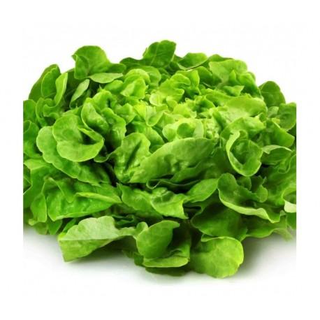Salade de Frédéric Ayme (Tarascon 13)