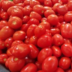 Tomates Roma de Jean Serradimigni (La Fare les Oliviers 13) (68464)