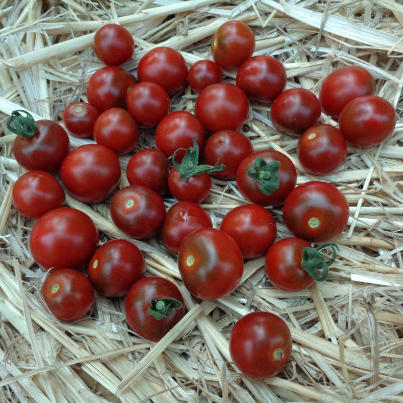 Tomates cerises de Jérôme Vasserot (Saint Cannat 13) x 250 grammes