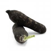 Radis noir de Julien Romilly ( Niozelles 04 ) (84231)